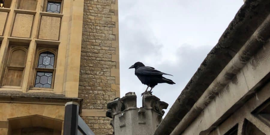Raven at The Tour of London