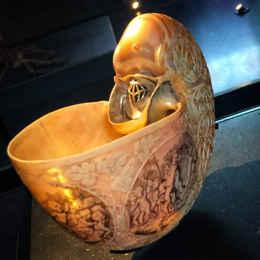 Sir Hans Sloane's beautifully carved nautilus shell
