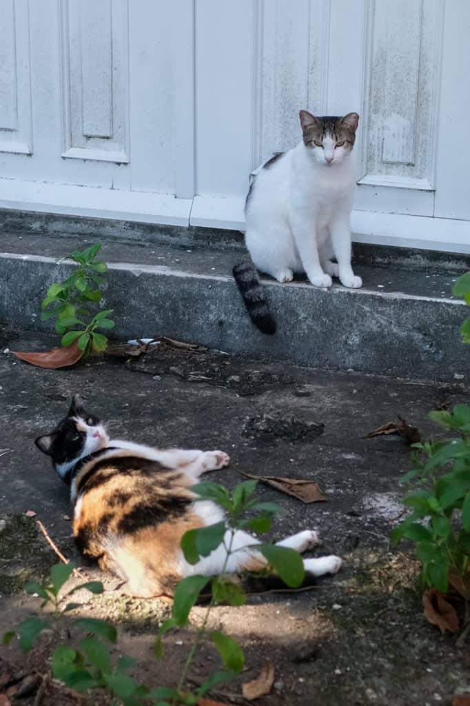Cats at Parque Las Palomas